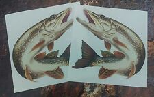 "x2 Superb Quality 6"" Pike  Decal printed on high quality waterproof vinyl"