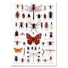 Bugs Insects A5 Identification Card Chart Postcard NEW