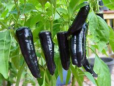 20 GRAINES de POIVRON MARCONI VIOLET / POURPRE Potager Légumes Plantes