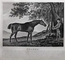 1831 ANTIQUE FARRIER HORSE PRINT ~ SHARKE