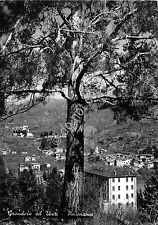 Cartolina - Postcard - Grandola ed Uniti - Panorama - 1959