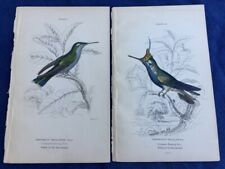 2 ORIGINAL JOHN GOULD HAND COLORED ENGRAVINGS TROCHILUS HUMMINGBIRDS 1849 TEXAS