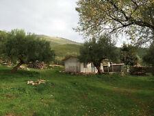 Bio-Olivenhain in Messinien mit 2 Gebaeuden !