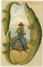 """Alligator Border Florida 643 """"When Melon is Ripe"""" Greetings frm the Sunny South"""