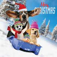 Basset Hound Meerkat Funny Charity Christmas Cards 5 Pack Animal Dog Lovers