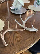 deer antler