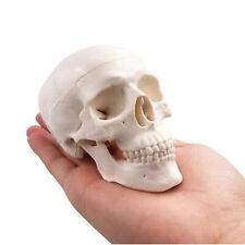Mini Human Anatomy Head Skull Bone Model With Removable Skull Cap For Education