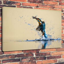 """Stunning Kingfisher Bird Printed Box Canvas Picture A1.30""""x20""""Deep 30mm Frame"""