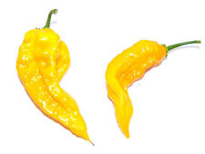 Fatalii Chilli - 25 Quality Seeds