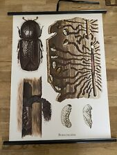Borkenkäfer Käfer Wald Insekten   Rollkarte Schulwandkarte 50 cm x 70 cm