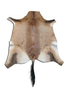 Deer Skin African Red Hartebeest Skin buck skin African Deer Skin Antelope hide