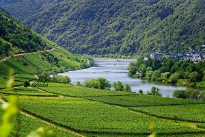Für Weinfreu(n)de Mosel,Rhein,Ahr ..4 Tage für 2 (DZ) z.b. 4* Hotel Wert € 349,-