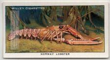 Norway Lobster Langoustine Scampi Marine Ocean c80 Y/O Ad Trade Card