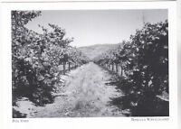 """*Postcard-The Full VInes"""" *Temecula Wine Country (A95-1)"""