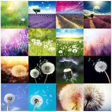 3 Size Dandelion Lavender Photography Backdrop Background Studio Photo Props