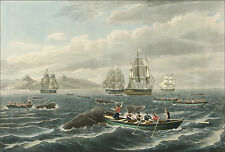 Images of Americana: Whaling Art: Shoal of a Sperm Whale  - Fine Art Print
