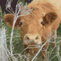 """Cheeky Brown Cow / Calf - Cross Stitch Kit 10"""" x 10"""" - 16 COUNT Aida - Anchor"""
