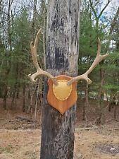 Western Rocky Mountain Mule Deer 5x3 Rack  Antlers Mount Taxidermy Horns