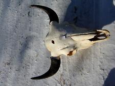 Buffalo Skull,American Bison,Native,Science,Head Horn,Taxidermy,Education Bull