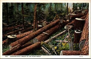 Two Postcards Logging Big Timber in the Northwest Railroad Train~137605