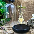 U56 (PI) Taxidermy Oddities REAL Hanging bat Bat Glass Dome Display skeleton