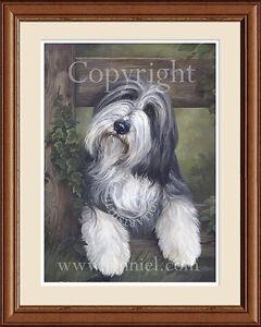 BEARDED COLLIE portrait 'Ella' fine art print by Lynn Paterson