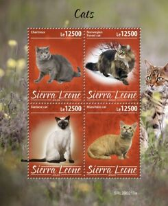 Sierra Leone Cats Stamps 2020 MNH Siamese Norwegian Forest Munchkin Cat 4v M/S