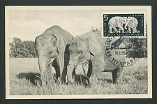 DDR MK 1956 TIERPARK BERLIN ELEFANT ELEPHANT MAXIMUMKARTE MAXIMUM CARD MC d4911