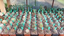 Cactus 50+ Seeds more than 20 Mixed Types, Excelent SET