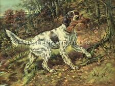 Antique Hunting Photograph Reprint 8X10 Osthaus English Setter Ruffed Grouse #2