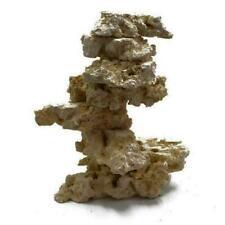 Corales cáliz