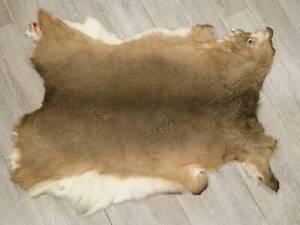 White Tail Deer Hide: #2 (39-02-G4208) 9UL1