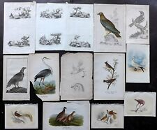 Birds 18th-19th Century. Mixed Lot of 14 Antique Prints. Book Plates