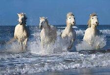 """White Horses"" ClearView HD Puzzle - 500 Pcs. - Hobbico #3003"