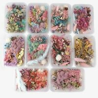 1 Box Colorful Real Dried Flower Plant For Aromatherapy Candle Epoxy Resin Craft