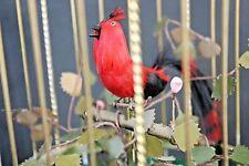 Video--Vintage Made in Japan Brass Ornate Cage Singing Bird Music Box Circa 1955