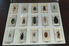 Lot divers insectes,  dans  resine.