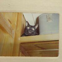 1967 Vintage Black Cat HALLOWEEN 35mm Slide   W6
