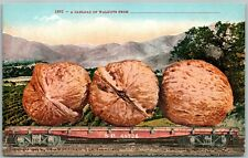 CARLOAD OF WALNUTS EXAGGERATED ANTIQUE POSTCARD