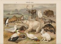 ca 1890 ARCTIC FAUNA POLAR BEAR WHITE OWL ELK Antique Chromolithograph Print