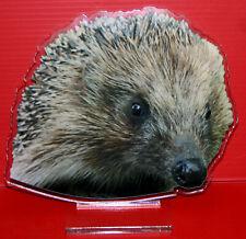 statuette photosculptée 10x15 cm animaux herisson 1 hedgehog Igel erizo