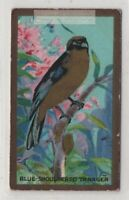 South American Blue Shouldered Tanager Bird  1920s Ad Trade Card