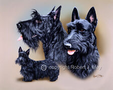 Scottish Terrier Multistudy Print by Robert J. May