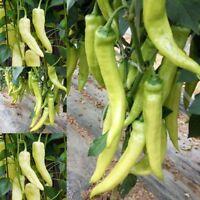 100Pcs/Bag Sweet Banana Pepper Capsicum Annuum Seeds Heirloom Home Garden