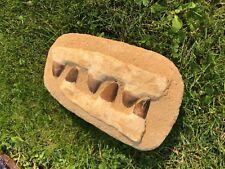 Mosasaur teeth in Matrix