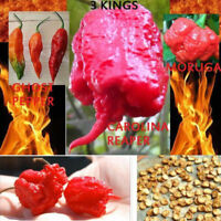 Carolina Reaper Trinidad Moruga Scorpion Hot Chili Seeds Ghost Pepper
