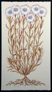 "Jules Roch ""Wild Carnations"" Hand Signed Ltd ed Fine Art Serigraph, botanical"