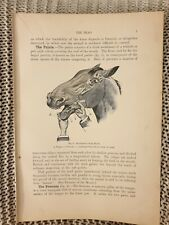 Examination of Horse's Mouth - Antique Book Page - 1906