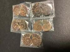 Wholesale Bulk Lot Of 5 Ammonite Pairs Polished Fossil Stones