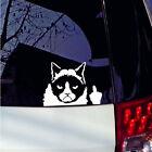 Funny Grumpy Cat For JDM Auto Car/Bumper/Window Vinyl Decal Sticker Decals